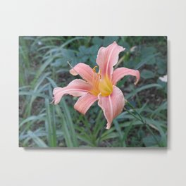 Blooming Tigerlily Metal Print