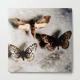 Entomology Specimin Metal Print