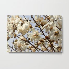 Golden Magnolia Metal Print