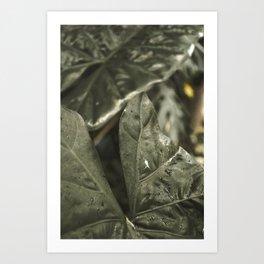 Naturaleza Art Print
