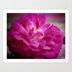 Just a Rose Art Print