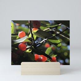 Jane's Garden - Sunkissed Red Berries Mini Art Print
