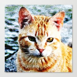 Young Yellow Cat Canvas Print