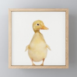 Hello Ducky Framed Mini Art Print