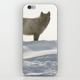 Yellowstone National Park - Wolf and Hot Spring iPhone Skin