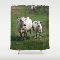 cows Shower Curtains featuring White Cows by BACK to THE ROOTS