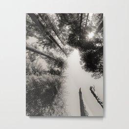 Sequoia's of Yosemite Metal Print