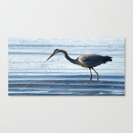 Great Blue Heron on Calm Waters Canvas Print