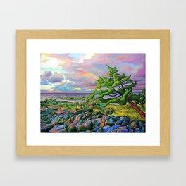 Windswept Juniper by Amanda Martinson Framed Art Print