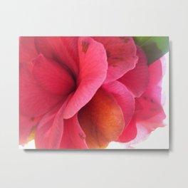 Backlit Bloom Metal Print