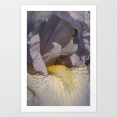 Pale Purple Iris Close Up 03 Art Print