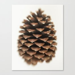 Pinecone #72 Canvas Print
