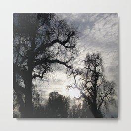 Oaks in Sunlight Metal Print