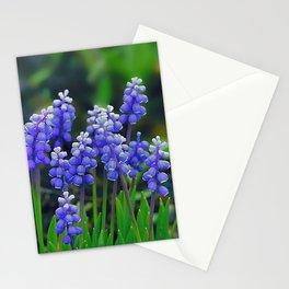 Muscari(3) Stationery Cards