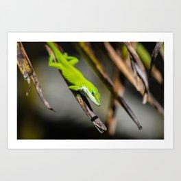 Green Carolina Anole Aloft Art Print