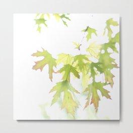 Soft Maple Leaves Metal Print