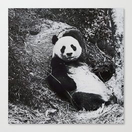 Urban Pop Art Panda Canvas Print