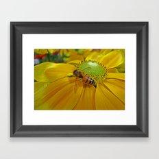 Honey Bee and Dahlia Framed Art Print