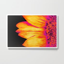Sunflower Hot Pink Yellow Metal Print