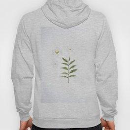 Beautiful White Floral Flowers Minimalist Arrangement With Green Leaf Stem Photography Botanical Art Hoody