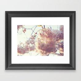 sunlit cherryflowers Framed Art Print