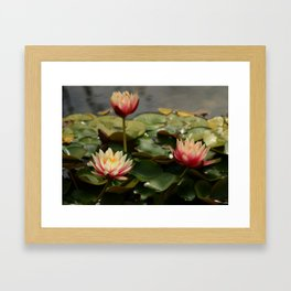 Waterlily Pond Framed Art Print