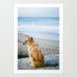 Beach Dog Art Print