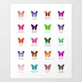 Butterflies 20 Art Print
