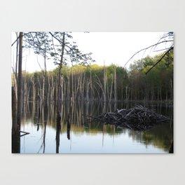 Dam Swamp Canvas Print