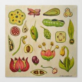 botany Canvas Print
