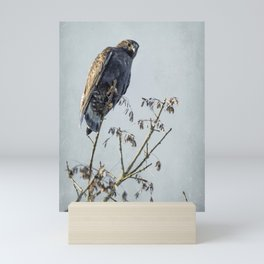 Red-Tailed Hawk, Rufous Morph Mini Art Print