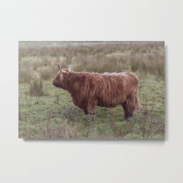 Vintage Scottish cow - Thurso, The Highlands, Scotland Metal Print