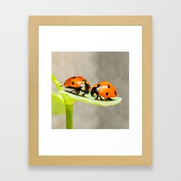 Ladybug Love | ladybird beetles | Watercolor Painting Framed Art Print