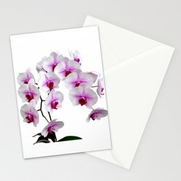 White and red Doritaenopsis orchid flowers Stationery Cards