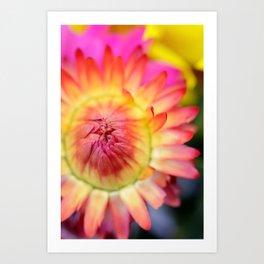 Orange and Yellow Tight Bud macro flower Art Print