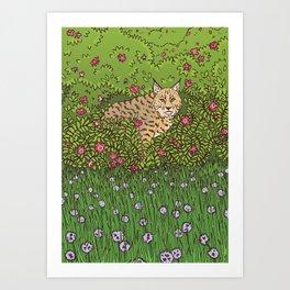 Bobcat & Wild Rose Art Print