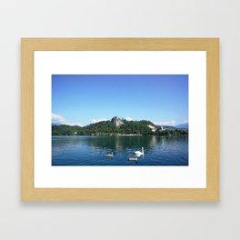 Swans in Bled Framed Art Print