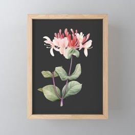 Honeysuckle on Charcoal Framed Mini Art Print