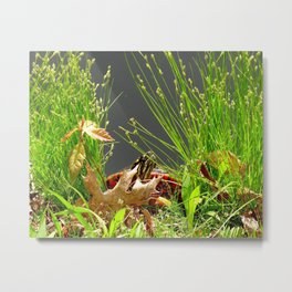 Turtle hiding in the leaves Metal Print
