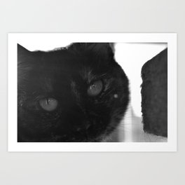 Allie Cat - Blak and White Art Print