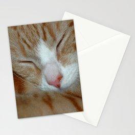Ginger Kitten Sleeping Stationery Cards