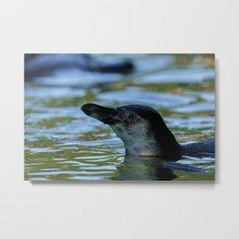 Swimming Young Penguin Metal Print