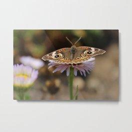 Brown Butterfly Metal Print