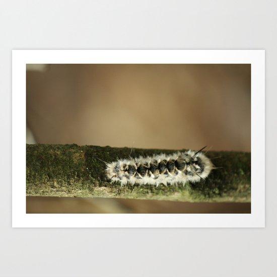 Caterpillar.  Art Print