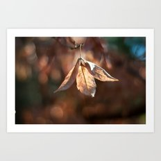 Late Autumn Light Art Print