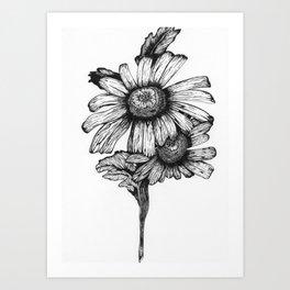 Botanical Daisy in Ink Art Print