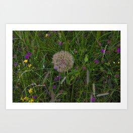 Field of flowers and Dandelions Art Print