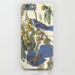 Florida scrub jay by Audubon iPhone Case
