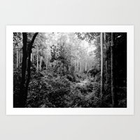 forest track Art Print
