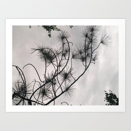 Matsunoki Art Print
